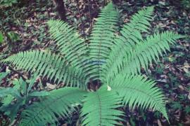 self-styled fern